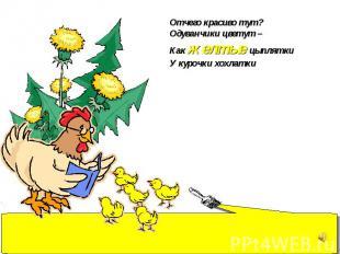 Отчего красиво тут? Одуванчики цветут – Как желтые цыплятки У курочки хохлатки