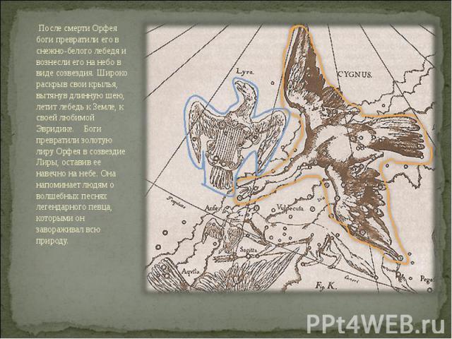 После смерти Орфея боги превратили его в снежно-белого лебедя и вознесли его на небо в виде созвездия. Широко раскрыв свои крылья, вытянув длинную шею, летит лебедь к Земле, к своей любимой Эвридике. Боги превратили золотую лиру Орфея в созвездие…