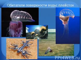 Обитатели поверхности воды: плейстон