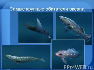 Самые крупные обитатели океана