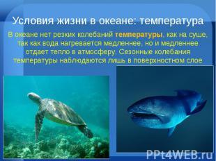 Условия жизни в океане: температура В океане нет резких колебаний температуры, к