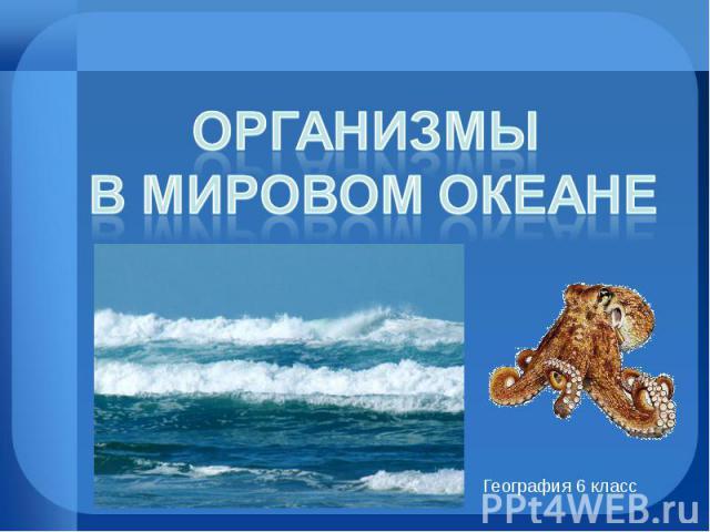 Организмы в Мировом океане