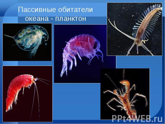 Пассивные обитатели океана - планктон
