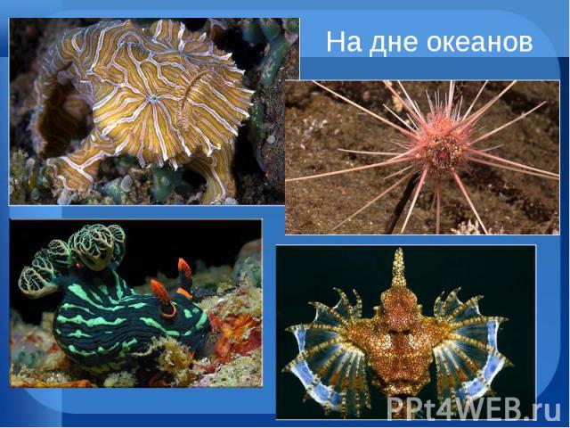 На дне океанов