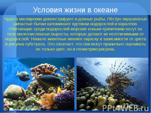 Условия жизни в океане Чудеса маскировки демонстрируют и донные рыбы. Пёстро окрашенные шипастые бычки напоминают куртинки водорослей и кораллов. Обитающие среди водорослей морские коньки-тряпичники несут на теле многочисленные выросты, которые дела…