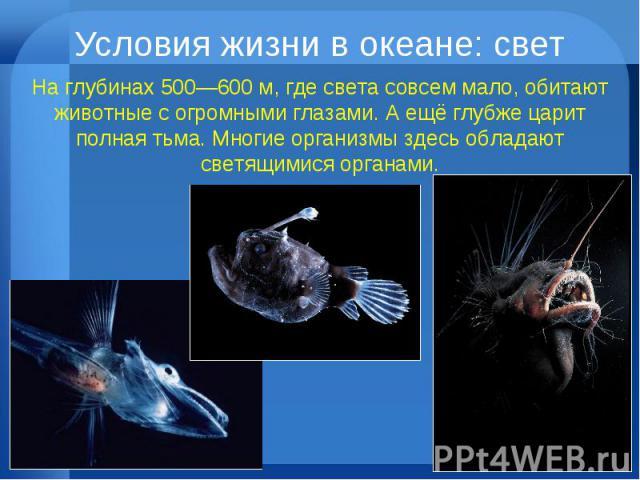 Условия жизни в океане: свет На глубинах 500—600 м, где света совсем мало, обитают животные с огромными глазами. А ещё глубже царит полная тьма. Многие организмы здесь обладают светящимися органами.