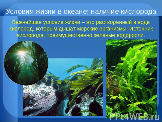 Условия жизни в океане: наличие кислорода Важнейшее условие жизни – это растворенный в воде кислород, которым дышат морские организмы. Источник кислорода, преимущественно зеленые водоросли.