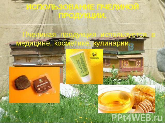 ИСПОЛЬЗОВАНИЕ ПЧЕЛИНОЙ ПРОДУКЦИИ. Пчелиная продукция используется в медицине, косметике, кулинарии.
