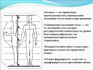 Осанка — это привычная вертикальная поза, вертикальное положение тела в покое и