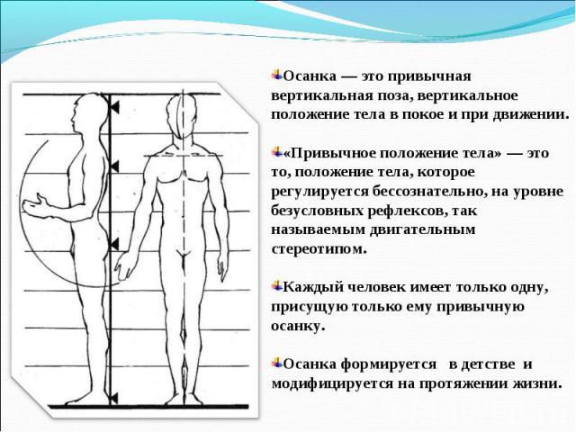Осанка — это привычная вертикальная поза, вертикальное положение тела в покое и при движении. «Привычное положение тела» — это то, положение тела, которое регулируется бессознательно, на уровне безусловных рефлексов, так называемым двигательным стер…
