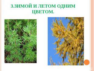 3.Зимой и летом одним цветом.