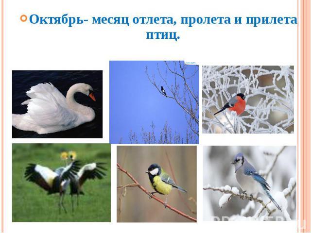 Октябрь- месяц отлета, пролета и прилета птиц.