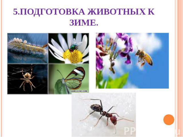 5.Подготовка животных к зиме.