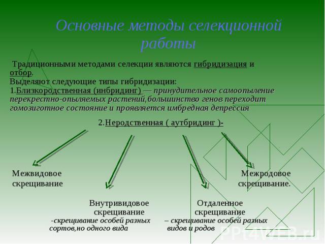Основные методы селекционной работы Традиционными методами селекции являются гибридизация и отбор. Выделяют следующие типы гибридизации: 1.Близкородственная (инбридинг) — принудительное самоопыление перекрестно-опыляемых растений,большинство генов п…