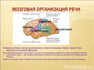 Мозговая организация речи Основные речевые центры расположены в левом полушарии.