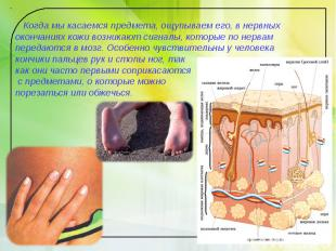 Когда мы касаемся предмета, ощупываем его, в нервных окончаниях кожи возникают с