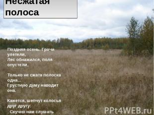 Несжатая полоса Поздняя осень. Грачи улетели, Лес обнажился, поля опустели, Толь
