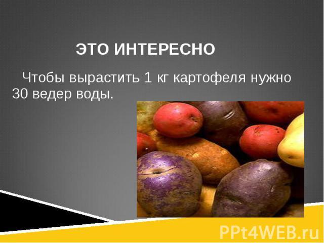 Чтобы вырастить 1 кг картофеля нужно 30 ведер воды. Чтобы вырастить 1 кг картофеля нужно 30 ведер воды.