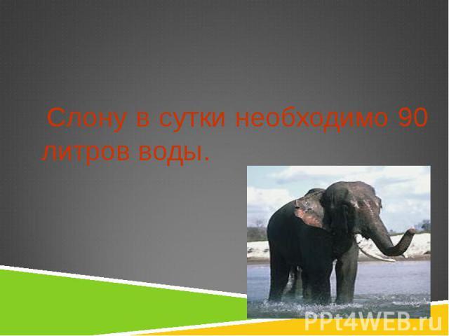 Слону в сутки необходимо 90 литров воды. Слону в сутки необходимо 90 литров воды.