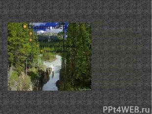 Флора Большую часть земель в Канаде занимает тайга и тундра . Огромную территори