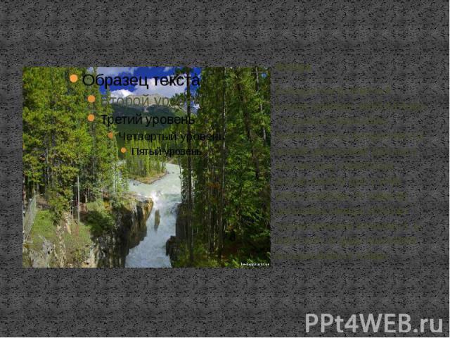 Флора Большую часть земель в Канаде занимает тайга и тундра . Огромную территорию занимают леса, которые богаты ценной древесиной. Для юга и юго- востока характерны желтая берёза, дуб и клён - символ Канады. По запасам древесины Канада уступает толь…