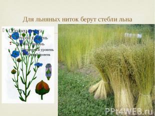 Для льняных ниток берут стебли льна