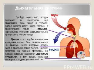 Дыхательная система Пройдя через нос, воздух попадает в носоглотку, где становит