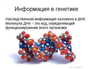Информация в генетике Наследственная информация заложена в ДНК Молекула ДНК – эт