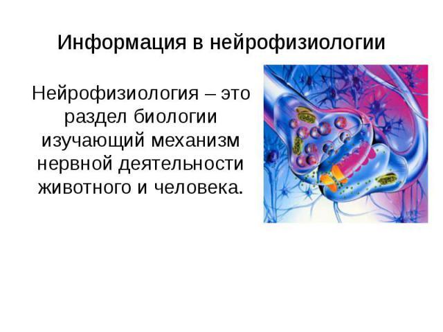 Информация в нейрофизиологии Нейрофизиология – это раздел биологии изучающий механизм нервной деятельности животного и человека.