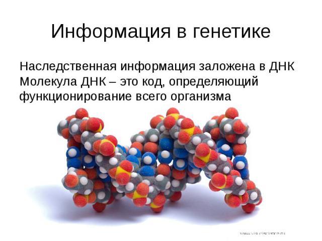 Информация в генетике Наследственная информация заложена в ДНК Молекула ДНК – это код, определяющий функционирование всего организма