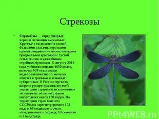 Стрекозы Стреко зы— отряд хищных, хорошо летающих насекомых. Крупные с под