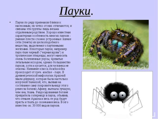 Пауки. Пауки по ряду признаков близки к насекомым, но четко от них отличаются, и связаны эти группы лишь весьма отдаленным родством. Хорошо известная характерная особенность многих пауков - умение плести сложно устроенные ловчие сети (тенета) из шел…