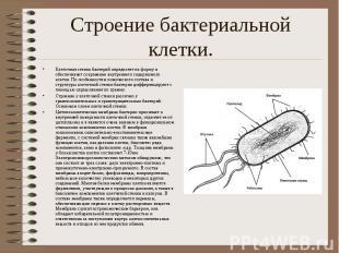Строение бактериальной клетки. Клеточная стенка бактерий определяет их форму и о