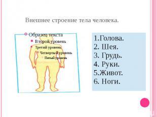 Внешнее строение тела человека.