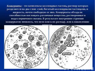 Коацерваты - это комплексы коллоидных частиц, раствор которых разделяется на два