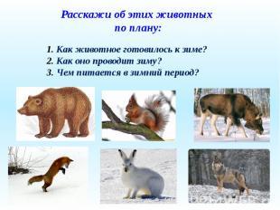 Расскажи об этих животных по плану: