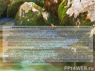 К биологическим факторам самоочищения водоема относятся водоросли, плесневые и д