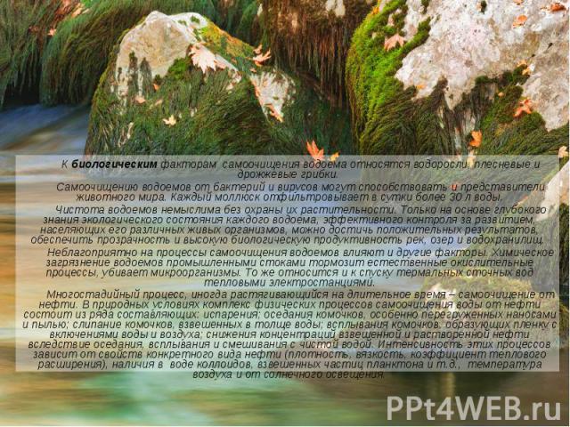 К биологическим факторам самоочищения водоема относятся водоросли, плесневые и дрожжевые грибки. К биологическим факторам самоочищения водоема относятся водоросли, плесневые и дрожжевые грибки. Самоочищению водоемов от бактерий и вирусов могут спосо…