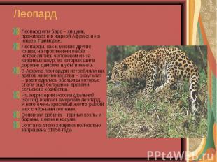 Леопард или барс – хищник, проживает и в жаркой Африке и на нашем Приморье. Леоп