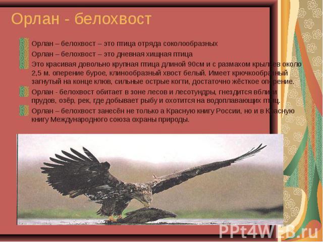 Орлан – белохвост – это птица отряда соколообразных Орлан – белохвост – это птица отряда соколообразных Орлан – белохвост – это дневная хищная птица Это красивая довольно крупная птица длиной 90см и с размахом крыльев около 2,5 м. оперение бурое, кл…