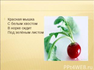 Красная мышка С белым хвостом В норке сидит Под зелёным листом. Красная мышка С