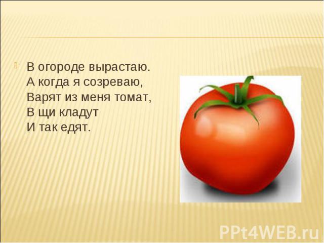 В огороде вырастаю. А когда я созреваю, Варят из меня томат, В щи кладут И так едят. В огороде вырастаю. А когда я созреваю, Варят из меня томат, В щи кладут И так едят.