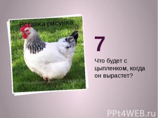 7Что будет с цыпленком, когда он вырастет?