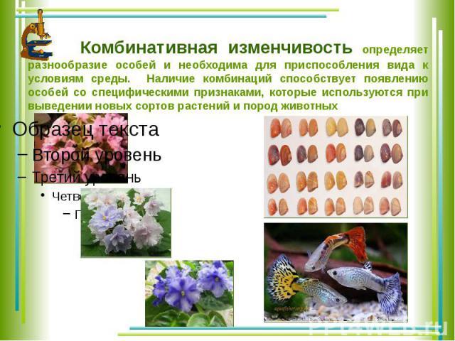 Комбинативная изменчивость определяет разнообразие особей и необходима для приспособления вида к условиям среды. Наличие комбинаций способствует появлению особей со специфическими признаками, которые используются при выведении новых сортов растений …