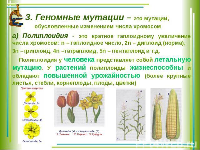 3. Геномные мутации – это мутации, обусловленные изменением числа хромосом а) Полиплоидия - это кратное гаплоидному увеличение числа хромосом: n – гаплоидное число, 2n – диплоид (норма), 3n –триплоид, 4n –татраплоид, 5n – пентаплоид и т.д. Полиплоид…