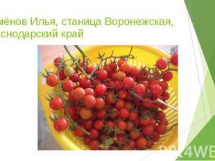 Семёнов Илья, станица Воронежская, Краснодарский край