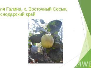 Тесля Галина, х. Восточный Сосык, Краснодарский край