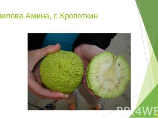 Халилова Амина, г. Кропоткин