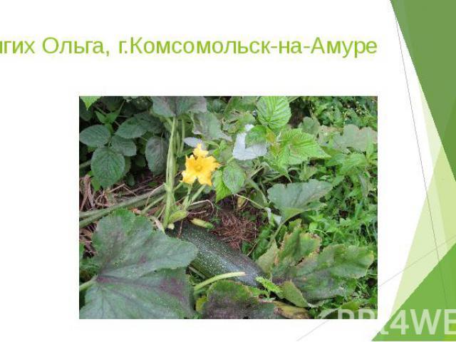 Долгих Ольга, г.Комсомольск-на-Амуре