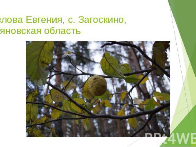 Павлова Евгения, с. Загоскино, Ульяновская область